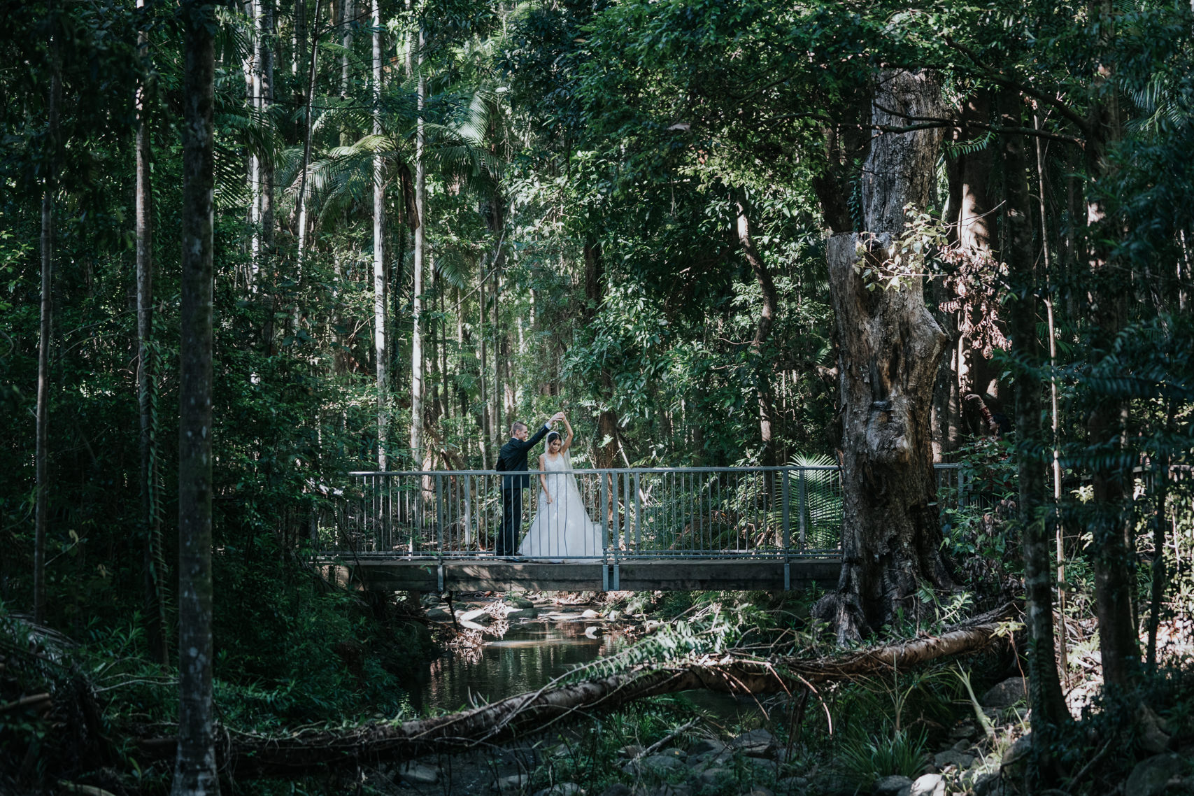 wedding photography Harrys lane buderim rainforest